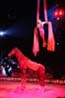 Circus act with horse under red spotlight